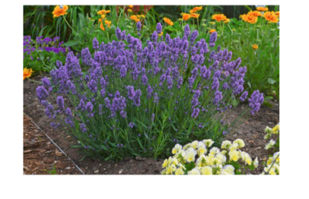 Lavenderrrr I love how they look retails for 12.99